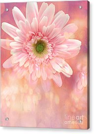Dreamy Cottage Shabby Chic Pink Yellow Mango Gerber Daisy Flowers  Acrylic Print by Kathy Fornal