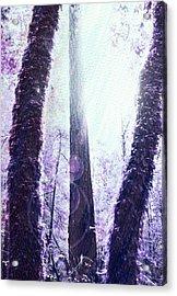 Dreamy Forest Acrylic Print by Nicole Swanger