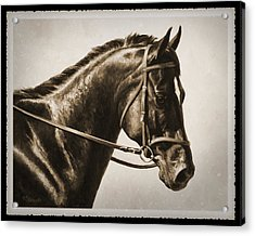 Dressage Horse Old Photo Fx Acrylic Print by Crista Forest