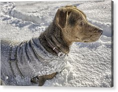Dressed For The Snow Acrylic Print by Jason Politte