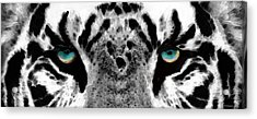 Dressed To Kill - White Tiger Art By Sharon Cummings Acrylic Print by Sharon Cummings