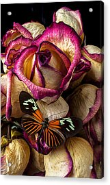 Dried Rose And Butterfly Acrylic Print by Garry Gay