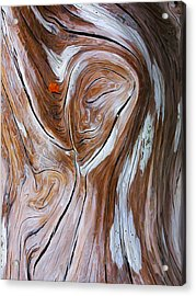 Driftwood 6 Acrylic Print by Bill Caldwell -        ABeautifulSky Photography