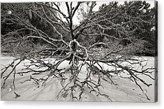 Driftwood Acrylic Print by Barbara Kraus - Northrup