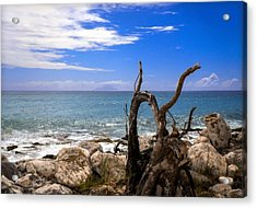 Driftwood Island Acrylic Print by Karen Wiles