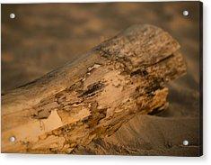 Driftwood Acrylic Print by Sebastian Musial