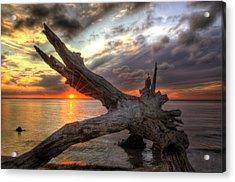 Driftwood Sunset Acrylic Print by Greg and Chrystal Mimbs