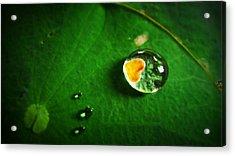 Droplet Of Love Acrylic Print by Suradej Chuephanich