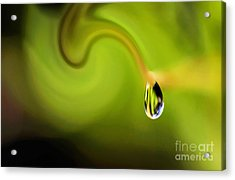 Droplet Ready To Drip Acrylic Print by Kaye Menner