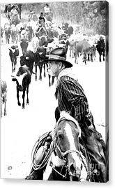 Drover At Work Acrylic Print by Fred Lassmann
