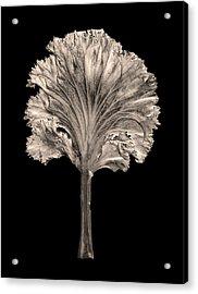 Dry Leaf 4 Acrylic Print by Sumit Mehndiratta