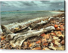 Dry Tortugas Driftwood Acrylic Print by Adam Jewell