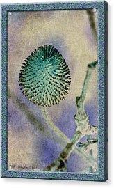 Dryweed Acrylic Print by WB Johnston