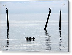 Duck Drifters Acrylic Print by Barry Goble