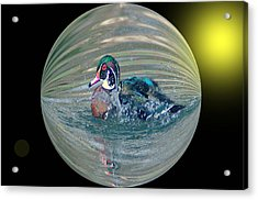 Duck In A Bubble  Acrylic Print by Jeff Swan