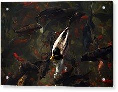 Ducks And Fish Acrylic Print by Bonita Hensley