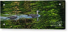 Ducks On Green Reflections - Panorama Acrylic Print by Kaye Menner