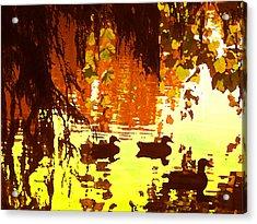 Ducks On Red Lake Acrylic Print by Amy Vangsgard
