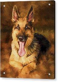 Duke Acrylic Print by David Wagner