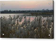 Dusters Acrylic Print by Qing