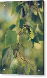 Each Sight Acrylic Print by Laurie Search