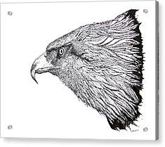 Eagle Head Drawing Acrylic Print by Mario Perez