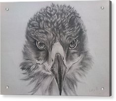 Eagle Acrylic Print by Lucy D