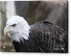 Eagle With Ruffled Feathers Acrylic Print by DejaVu Designs