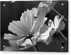 Early Dawns Light On Fall Flowers Bw 02 Acrylic Print by Thomas Woolworth