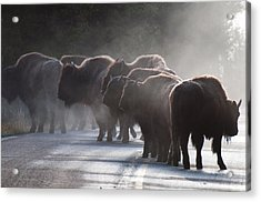 Early Morning Road Bison Acrylic Print by Bruce Gourley
