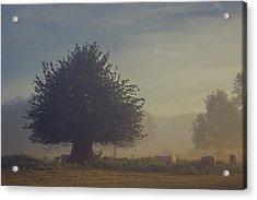 Early Morning Sheep Meet Acrylic Print by Chris Fletcher