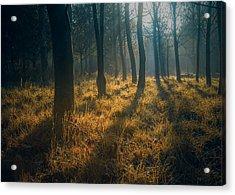 Early Morning Woodland Walk Acrylic Print by Chris Fletcher