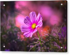 Early Sun Light Acrylic Print by Thomas Woolworth