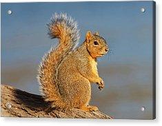 Eastern Fox Squirrel (sciurus Niger Acrylic Print by Larry Ditto