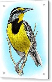 Eastern Meadowlark Acrylic Print by Roger Hall