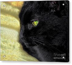 Ebony Acrylic Print by Dale   Ford