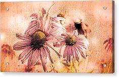 Echinacea Impressions  Acrylic Print by Bob Orsillo