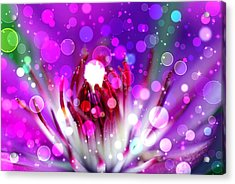 Effervescent Acrylic Print by Don Wright
