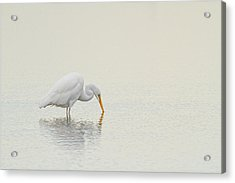 Egret Finds Himself Acrylic Print by Karol Livote