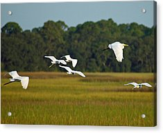 Egrets In Flight On Jekyll Island Acrylic Print by Bruce Gourley