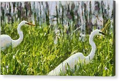 Egrets Painting Acrylic Print by Dan Sproul