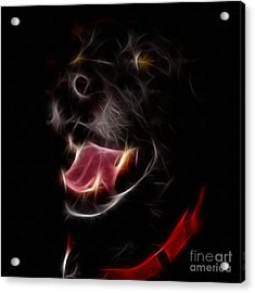 Electric Canine Acrylic Print by Barbara Griffin