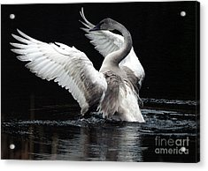 Elegance In Motion 2 Acrylic Print by Sharon Talson