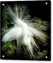 Elegance Of Creation Acrylic Print by Karen Wiles