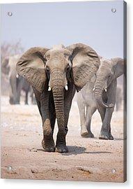 Elephant Bathing Acrylic Print by Johan Swanepoel