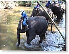 Elephant Baths - Maesa Elephant Camp - Chiang Mai Thailand - 01131 Acrylic Print by DC Photographer