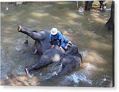 Elephant Baths - Maesa Elephant Camp - Chiang Mai Thailand - 011310 Acrylic Print by DC Photographer