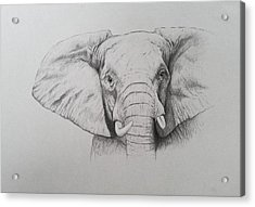 Elephant Acrylic Print by Ele Grafton