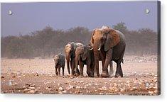 Elephant Herd Acrylic Print by Johan Swanepoel