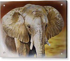 Elephant Acrylic Print by Julian Wheat